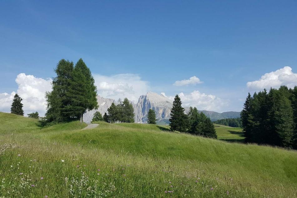 Willkommen im Apartments C�sa Martagon in St. Ulrich